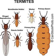 Cartoon type of termites collection set