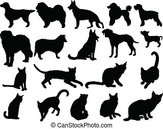 cat and dog collection