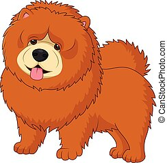 Chow chow dog breed - Illustration of Chow chow dog breed