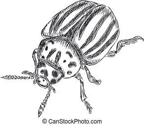Illustration of Colorado beetle