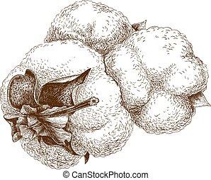 illustration of cotton