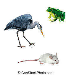 illustration of Crane bird, white mouse and green frog isolated on white background, Grey Heron standing in the water hunting with head bent down, Ardea Cinerea,
