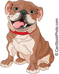 English bulldog - Illustration of cute English bulldog
