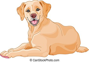 Illustration of cute Labrador