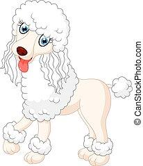 cute  poodle dog - Illustration of cute  poodle dog