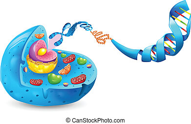 Deoxyribonucleic acid - Illustration of Deoxyribonucleic ...