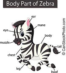 illustration of Diagram showing body part of zebra