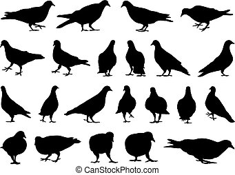 Illustration of different doves