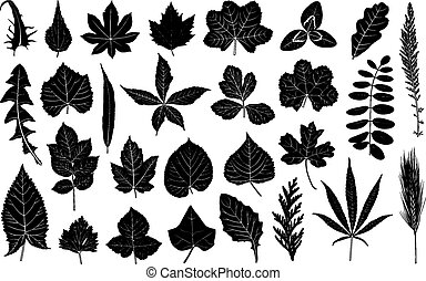 Illustration of different leaves