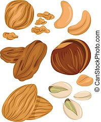 Types of Nuts - Illustration of Different Types of Nuts With...