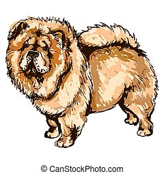 Illustration of dog breed Chow-Chow - Vector colorful...