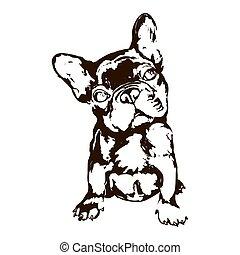 Illustration of dog breed French bulldog