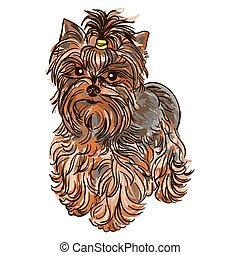 Illustration of dog breed Yorkshire Terrier