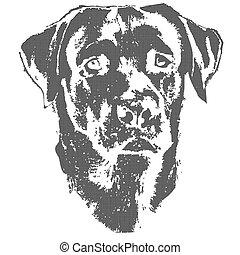 Illustration of dog, head of labrador retriever