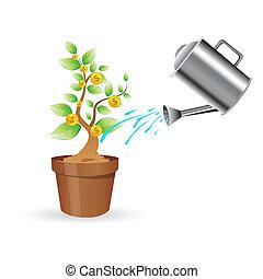 dollar plant - illustration of dollar plant on white...