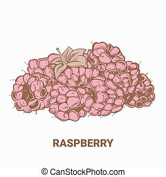 Illustration of drawing raspberry. Hand draw illustration for design. Vector engraving drawing antique illustration of raspberry with leafs.