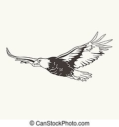 illustration of eagle. Black and white style