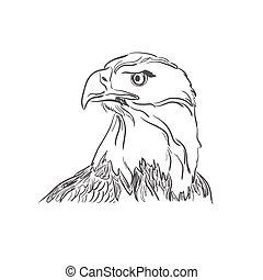 Illustration of eagle face