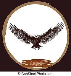 illustration of eagle, hawk bird