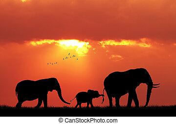 elephants family at sunset