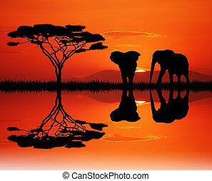 elephants in the junglee