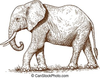 illustration of engraving elephant - vector illustration of...