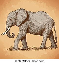 illustration of engraving elephant