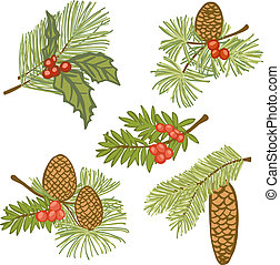 Illustration of evergreen branches with cones and berries, design elements isolated on white background