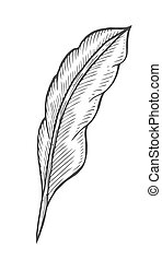 illustration of feather