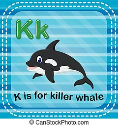 Flashcard letter K is for killerwhale