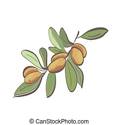 Illustration of flat argan fruits on branch isolated on ...