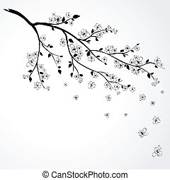 Illustration of flowering branch of Japanese cherry tree