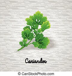 Fresh green leaves coriander