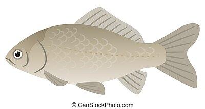 Illustration of freshwater fish crucian carp.