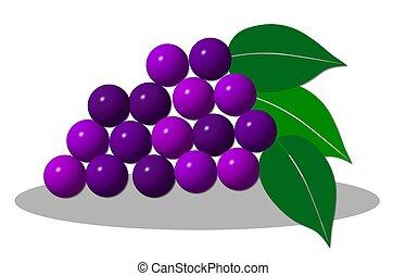 illustration of grape on white