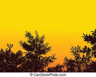 grass leaf background