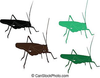 grasshopper - vector