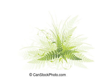 green fern - Illustration of green fern against white...