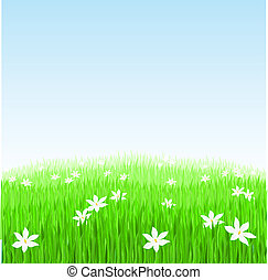 Green grass with white flowers