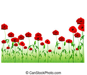 green poppy field with copy-space - illustration of green ...
