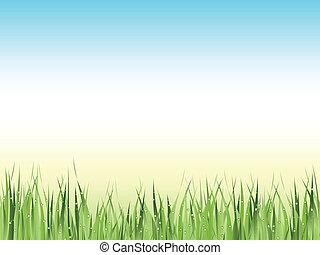 green wet grass