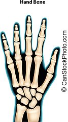 Illustration of hand bone