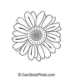 Illustration of hand drawn daisy, doodle style