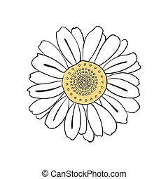 Illustration of hand drawn daisy