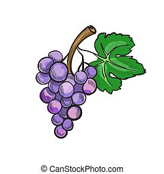 Illustration of hand drawn doodle grapes