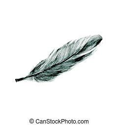 Illustration of hand drawn feather