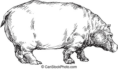 hand drawn hippo