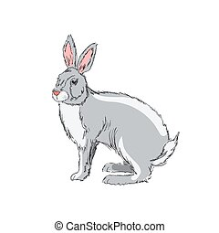 Illustration of hand drawn rabbit