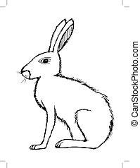 illustration of hare, wildlife, nature, animal