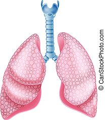 Illustration of healthy Lungs